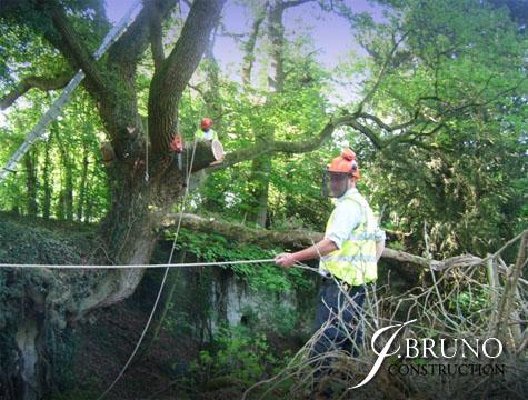 24 Hr Tree Team (1)